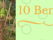 Benefits Gardening