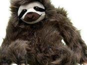 Inspired Endangered Sloths Sloth Meditation