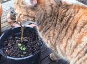 Irritating Plant Month February 2017 Viburnum