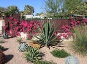 Watering Garden With These Drought Tolerant Plants
