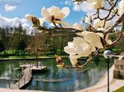 Magnificent Magnolia Tree Minho