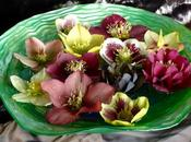 Vase Monday: Bowl Hellebores