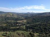Hunting Wild Asparagus Sardinia, Italy