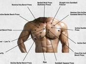 Pectoral Exercises Best That Will Help Build Massive Chest