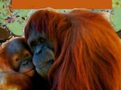 Biomimicry Young Children Inspired Endangered Orangutangs