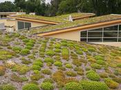 "Ways Benefits ""Going Green"" With Your Roof"