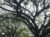 DAILY PHOTO: Trees Mark's Road