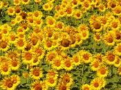 Flowers That Will Beauty Colour Your Garden