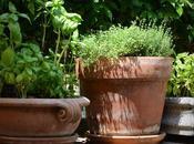 Grow Basil Your Indoor Herb Garden