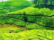 Best Places Visit Kerala June