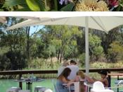 Visiting Barossa Valley Wineries South Australia