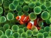 Noses Baffled Ocean Acidification