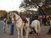 Srirangapatnam: Slice Royalty with Pervading Spirit Tipu Sultan
