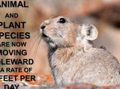 #ClimateFacts Series: #ClimateChange #Science #SpeciesMigration #Pika