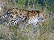 BOTSWANA, AFRICA, ANIMAL SAFARI, Guest Post Paul