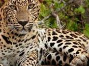 Best Wildlife Experiences Your Lanka Tour