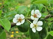 Beer/Cider Photo Week: Apple Blossoms Orchards