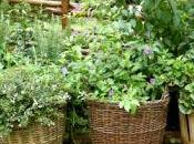 Beauty Container Gardens