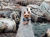 #HowTo Prepare Your #pets #NaturalDisaster #ClimateChange