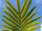 About Cycas Their Growth