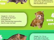 [Infographic] Kitten Growth Chart Age, Weight Food