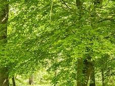 Tale Woods