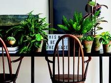 Definitive Guide House Plants
