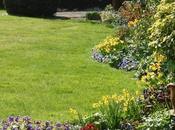 Garden Decluttering with KonMari Method Guide