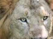 DAILY PHOTO: Lion, Tiger, Bear