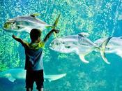 Eurotunnel Road Trip With Kids Travelling Boulogne-sur-Mer, France Nausicaa Aquarium