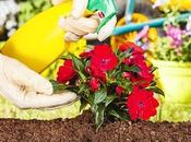 Tips Start Your Backyard Landscaping Yourself