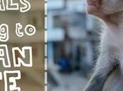 Animals Adapting Urban Life