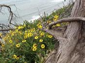 CLIFF WALK, Santa Barbara,