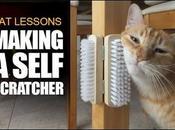 [Video] –How Make Self-Scratcher Cats