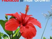 Hibiscus Hair Growth: Benefits Use?