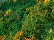 Human Mistakes: Deforestation
