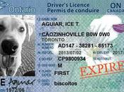 After Years, Officially Unlicensed