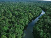 Stroll Through Amazonian Rainforest Your Desktop; Good Bad?