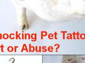 Shocking Tattooed Pets Blur Line Between Art, Ownership Abuse