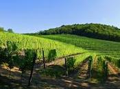 From Italy with Wine Italian