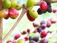Trail Perfect Brew: Coffee