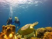 Adventure-Filled Romantic Destinations Your Next Diving Getaway