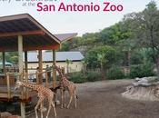 Breakfast with Giraffes Antonio