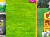 Scotts Fertilizer Vigoro Which Best?