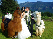 What Animals Suitable Your Wedding