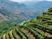 Douro Valley, Portugal: Album