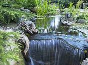 Choose Best Water Pump Your Pond
