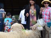 Search Sheep Achill Island