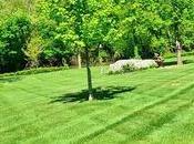 Winterizer Fertilizer When Apply