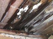 Cost-Effective Tips Getting Dampness Humidity Inside Your Home